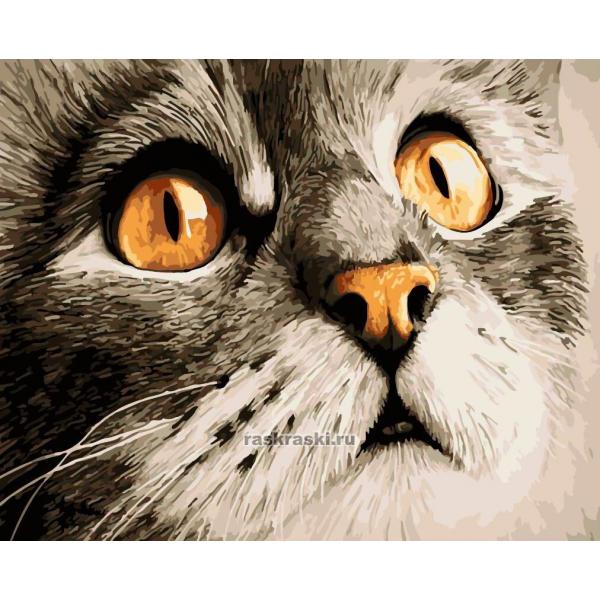 Картина по номерам Paintboy Original «Серый красавчик»