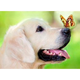 Пёс и бабочка (картина стразами)