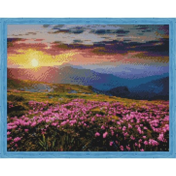 Цветущее поле на закате