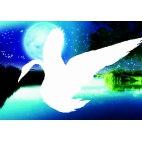 Лебедь в ночи