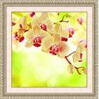 Алмазная вышивка Нежная орхидея